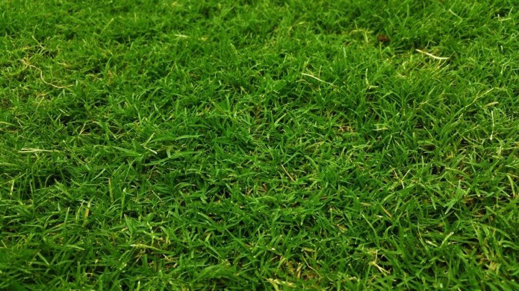 8 Tips om je Gras te Onderhouden