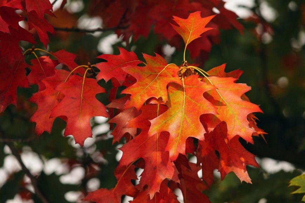 Herfstblaadjes op een boom