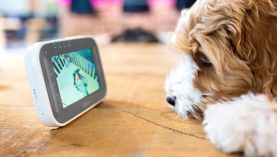 Hond die naar het scherm van babyfoon kijkt