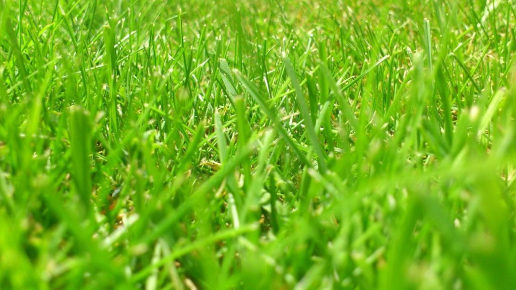 Grasveld van dichtbij