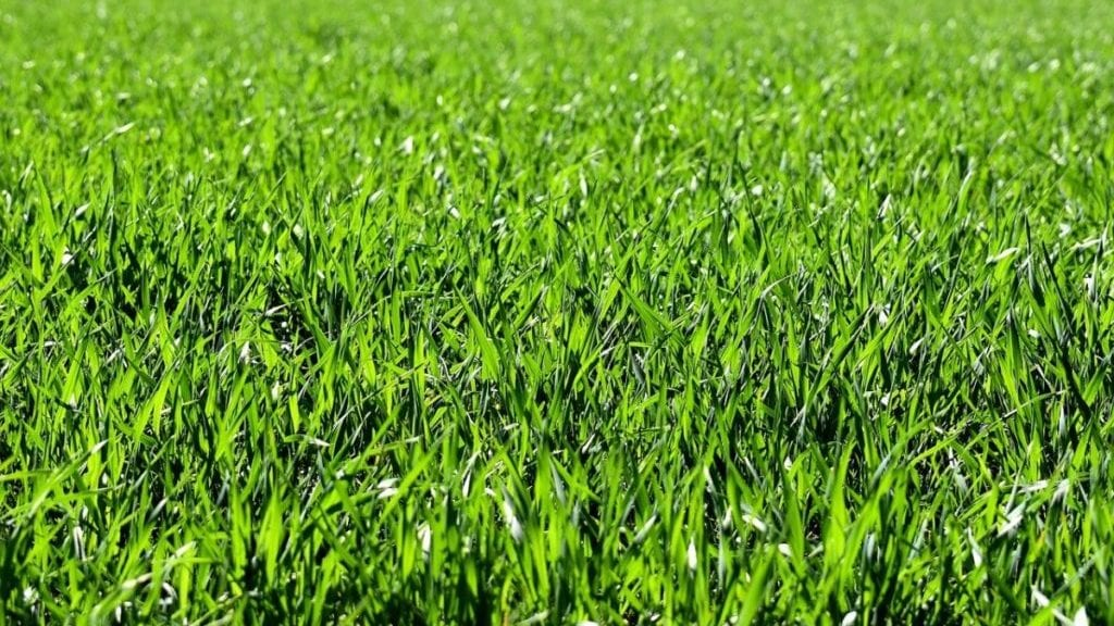 Grassprieten