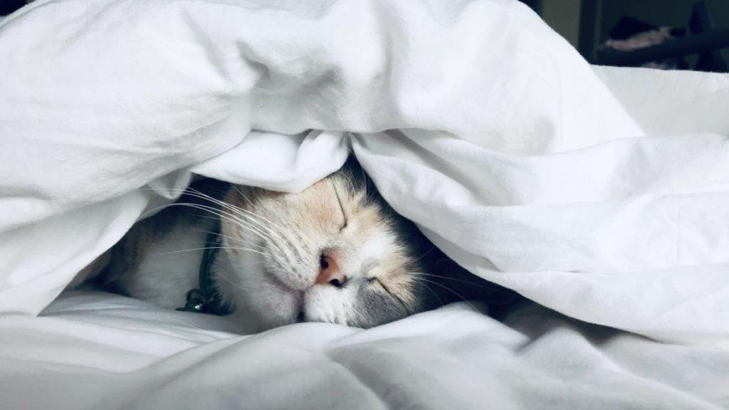 Kat Slaapt Onder Het Dekbed