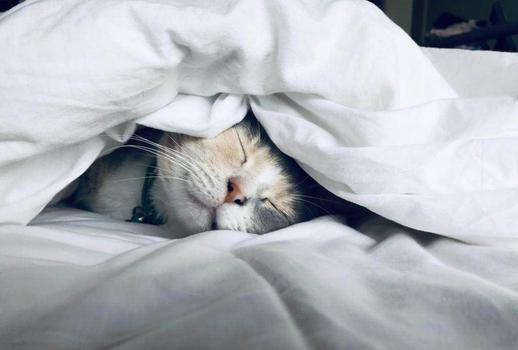 Slapende kat in bed