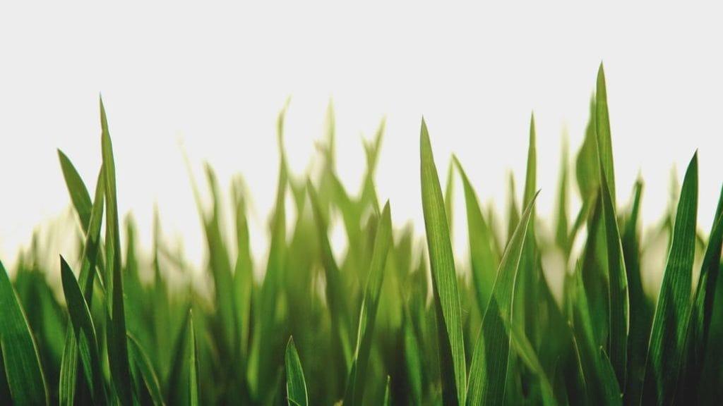 Grassprietjes in de zon