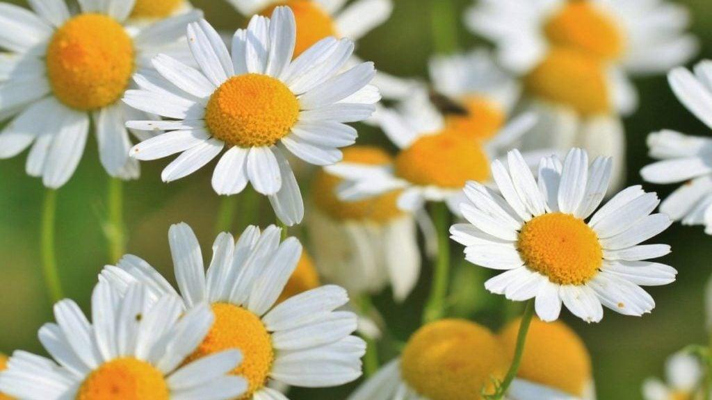Bloemen in close-up