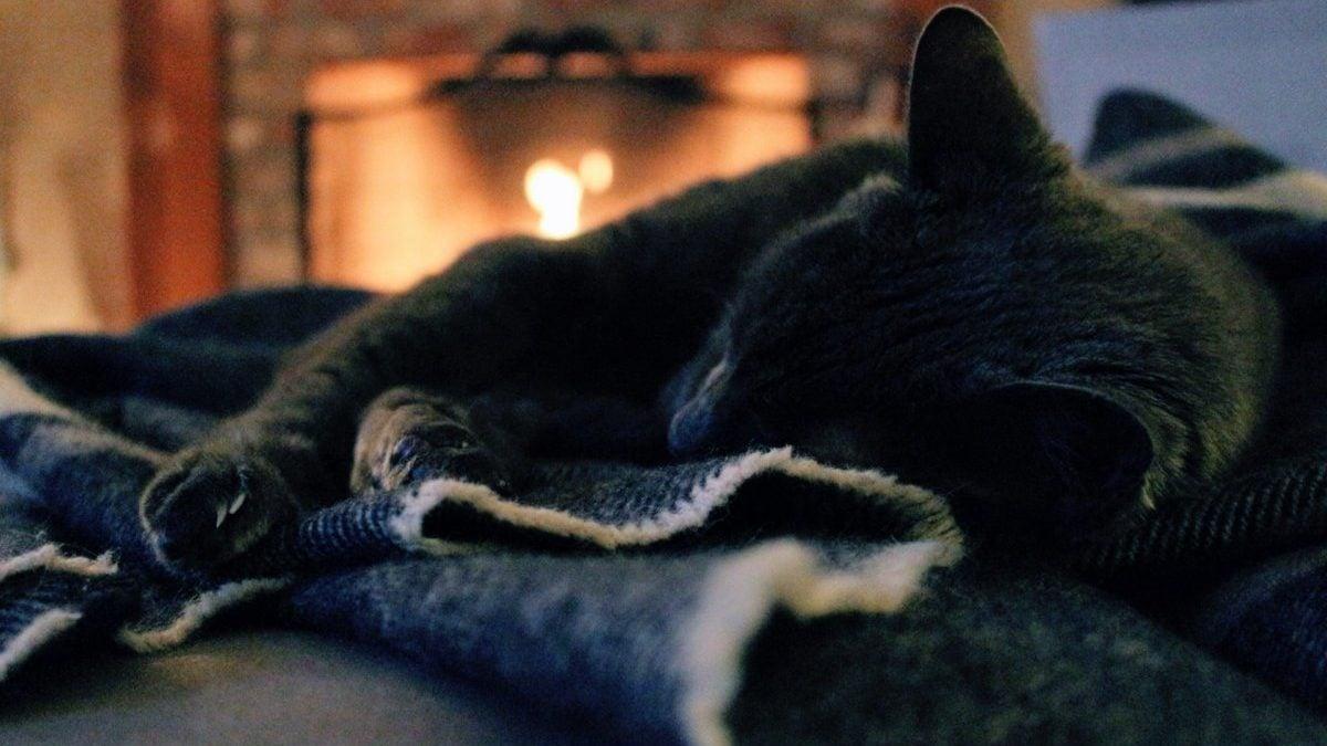 Slapende kat op dekentje