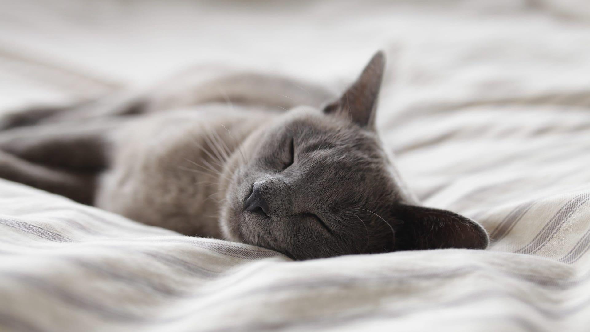 Slapende kat op bed