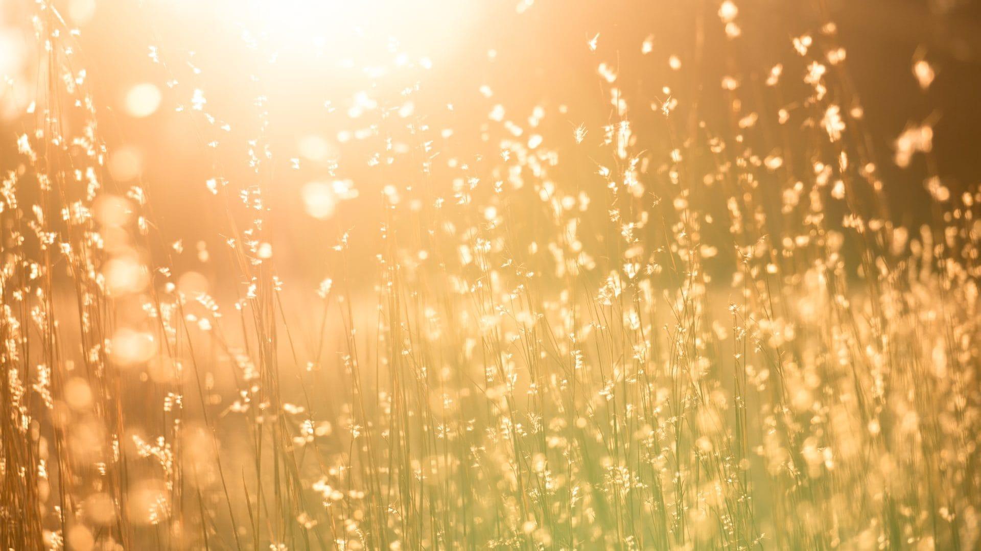 Veld met lang gras en zonnestralen die erdoorheen schijnen