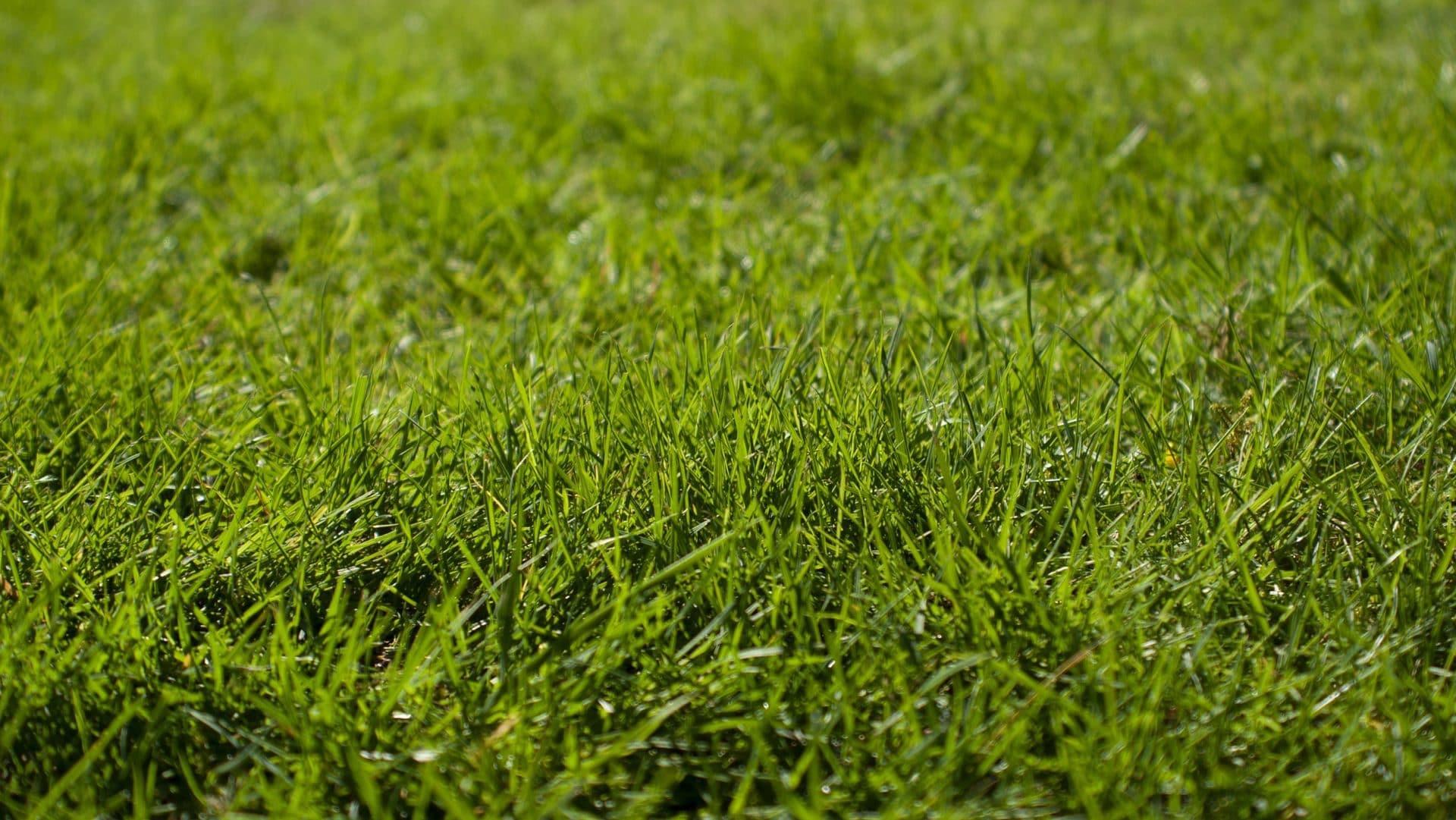 Gras, vooraanzicht