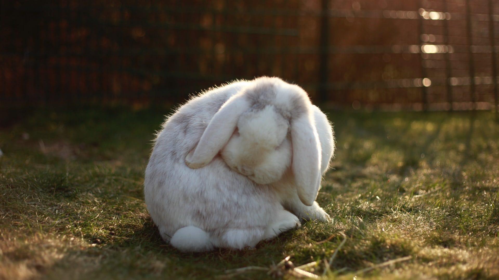 Wit konijntje op gras, vooraanzicht