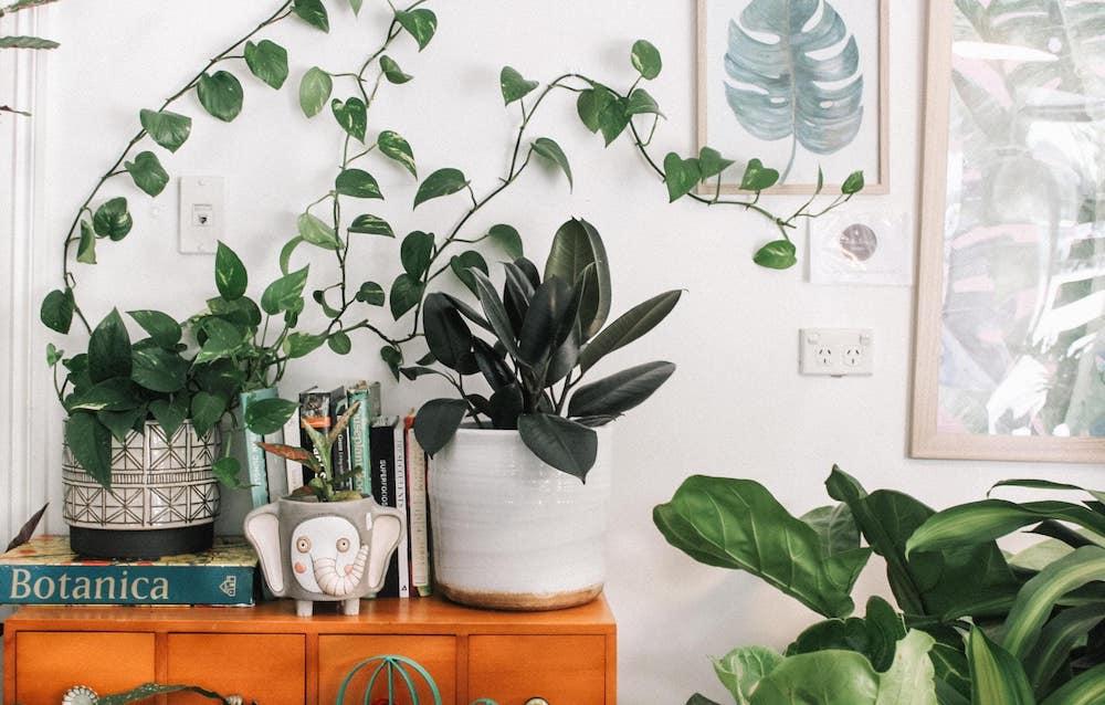 planten op een kastje