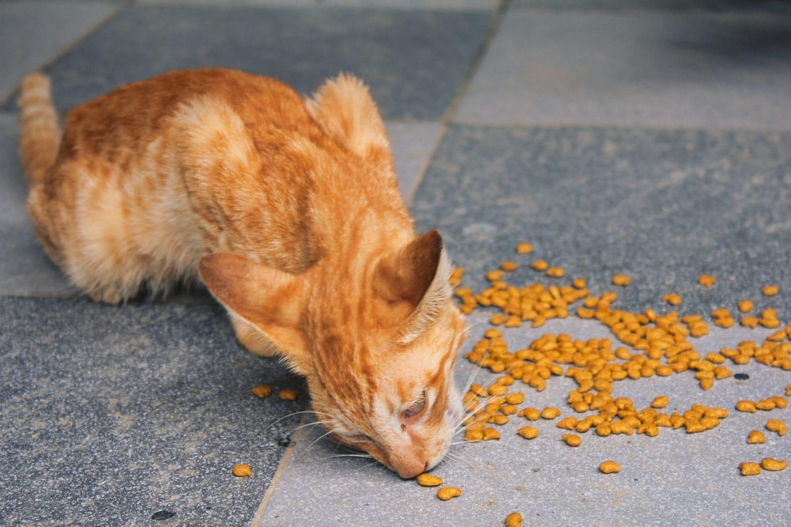 Rode kat die brokjes aan het eten is
