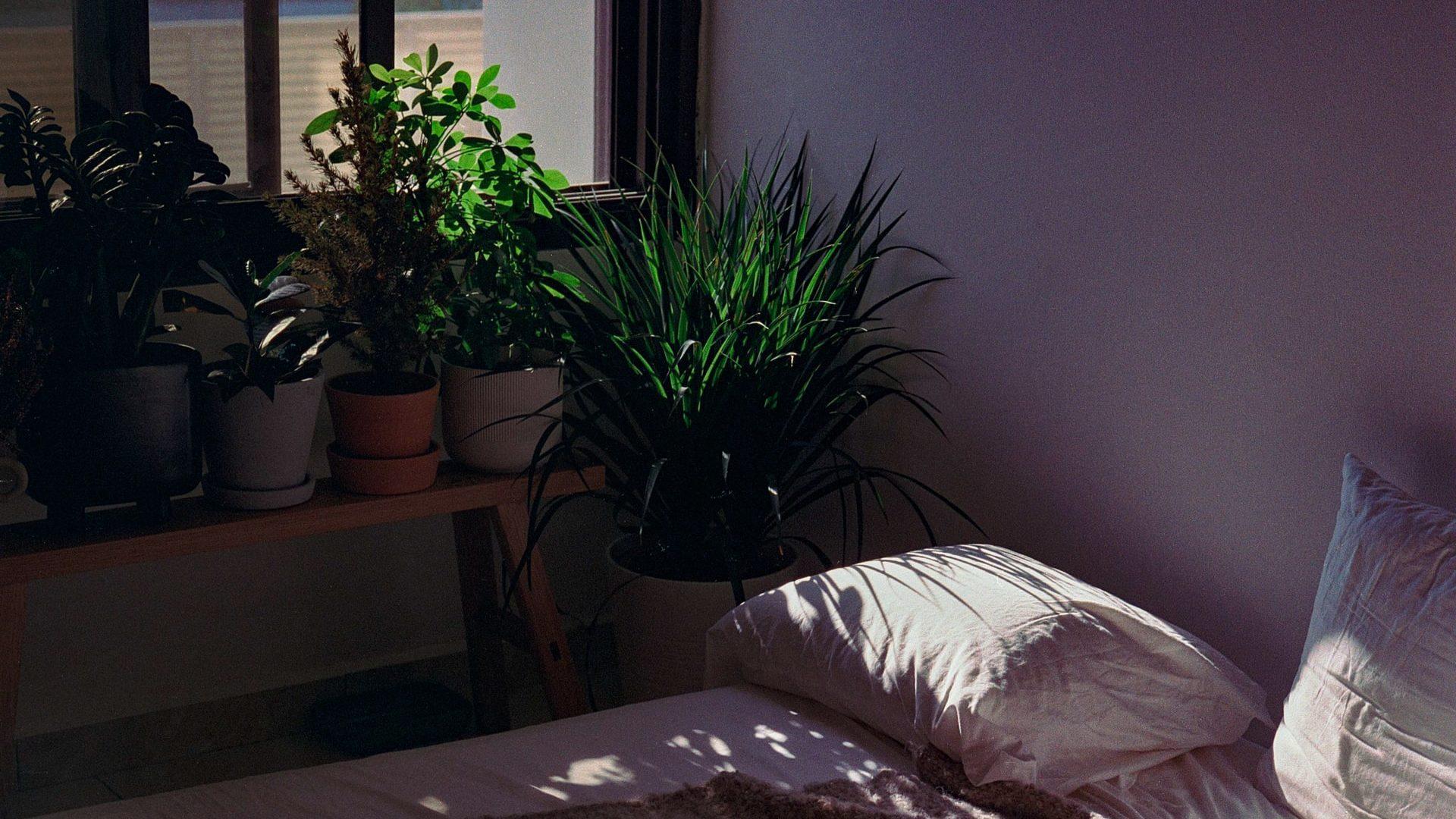Planten op bankje bij raam en bed, vooraanzicht