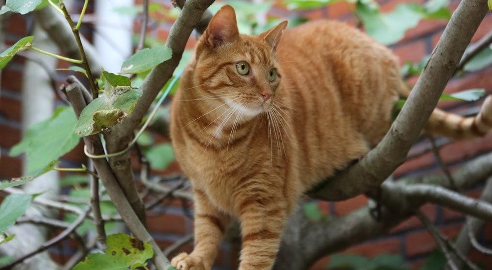 kat buiten in boompje