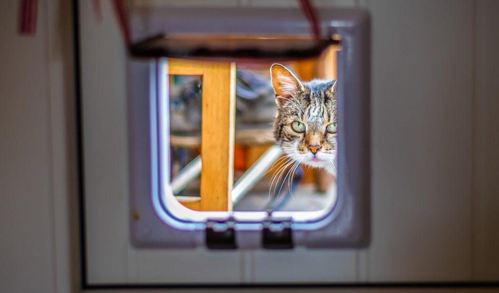 Het Beste Kattenluik om je Kat Vrijheid te Geven