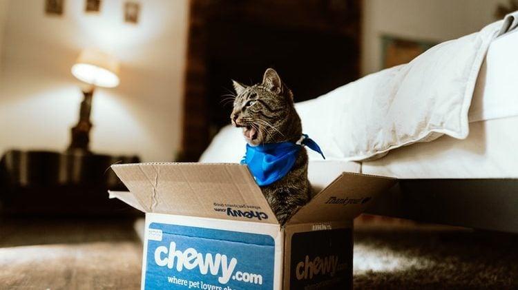 kat in doos in de slaapkamer