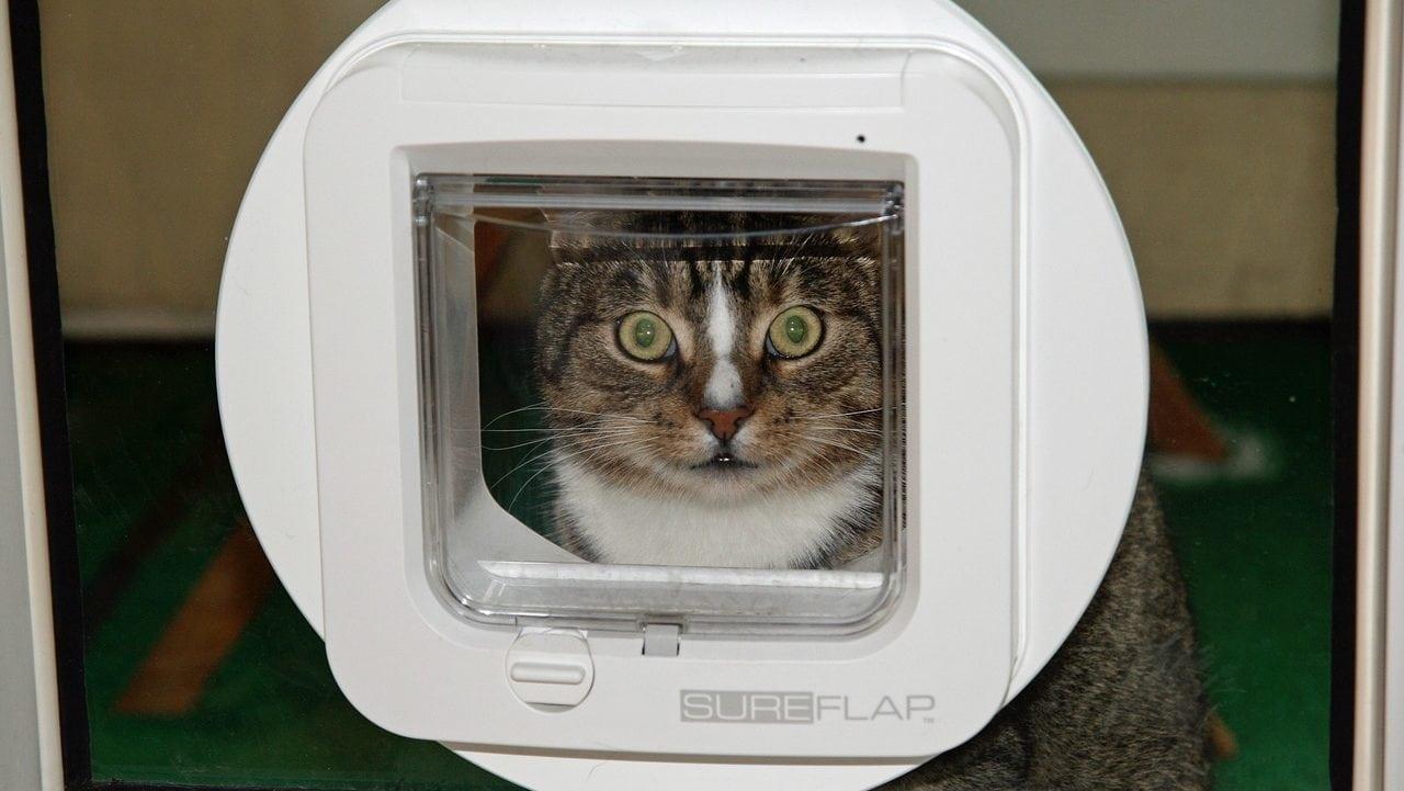 Kat achter kattenluikje, vooraanzicht