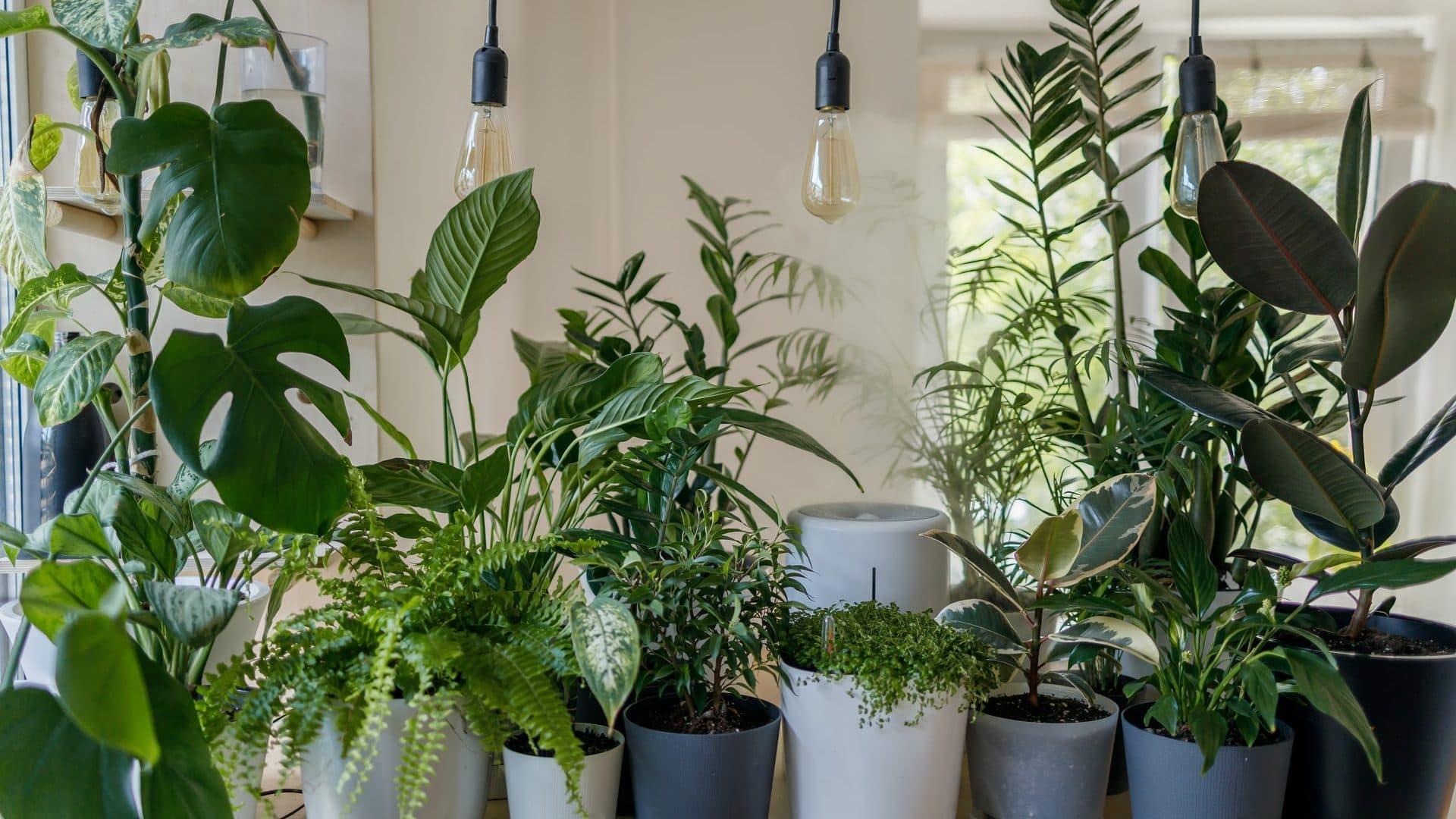 Verschillende kamerplanten op tafel, vooraanzicht
