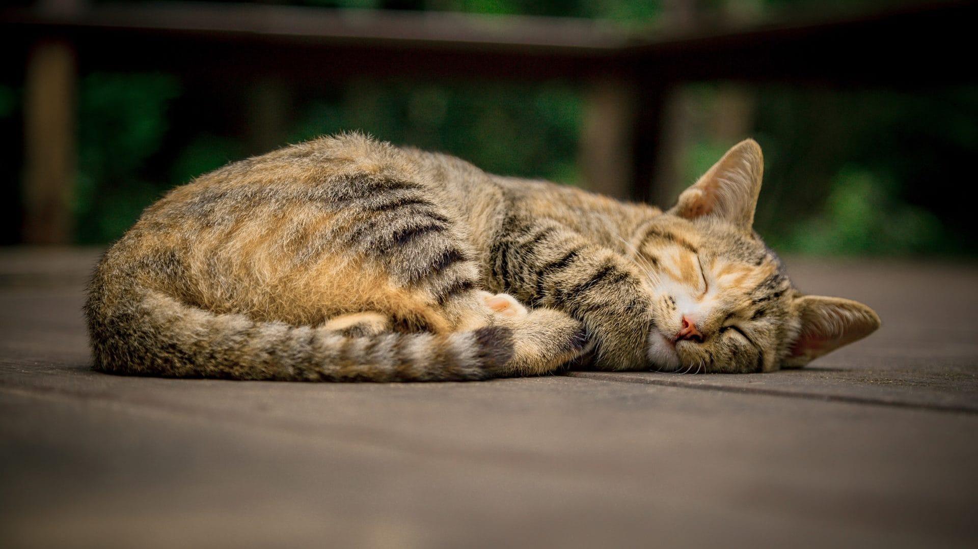 Slapende kat op bruine ondergrond