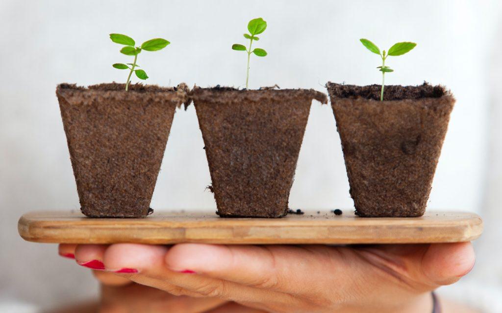 De Beste Potgrond voor Mooie Planten