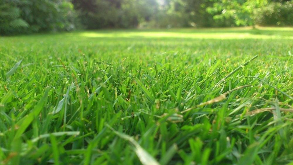 Grasveld, close-up, vooraanzicht