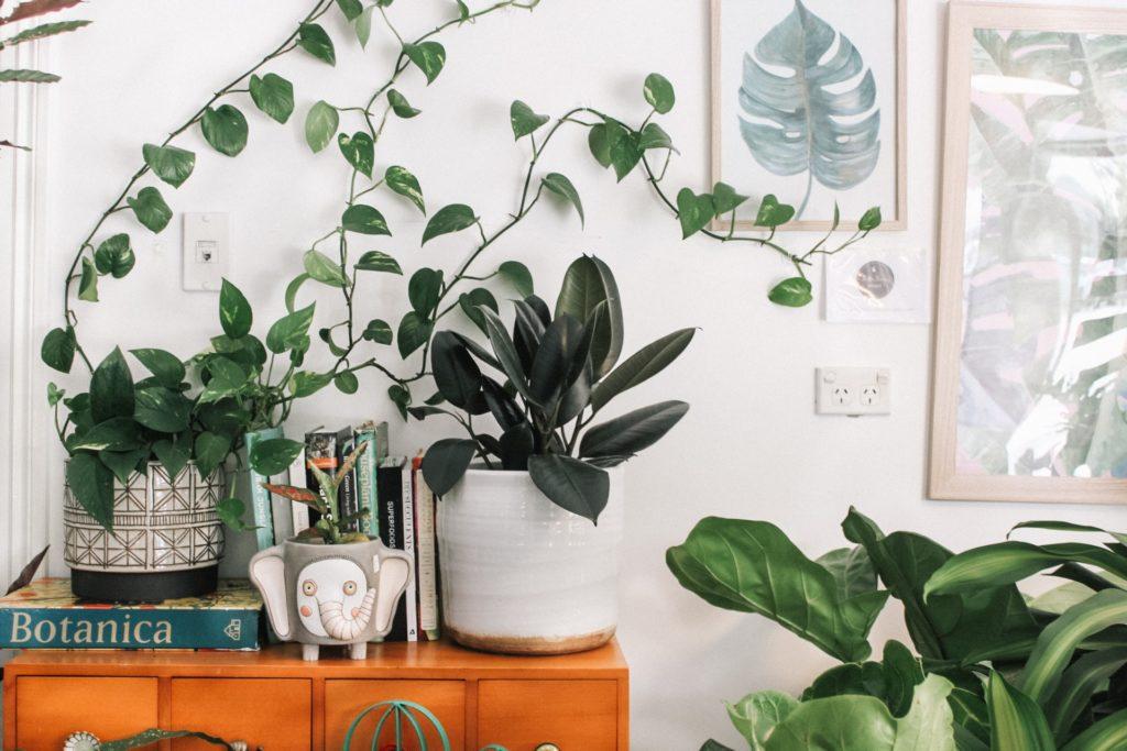Help, mijn Plant Heeft Gele Bladeren!