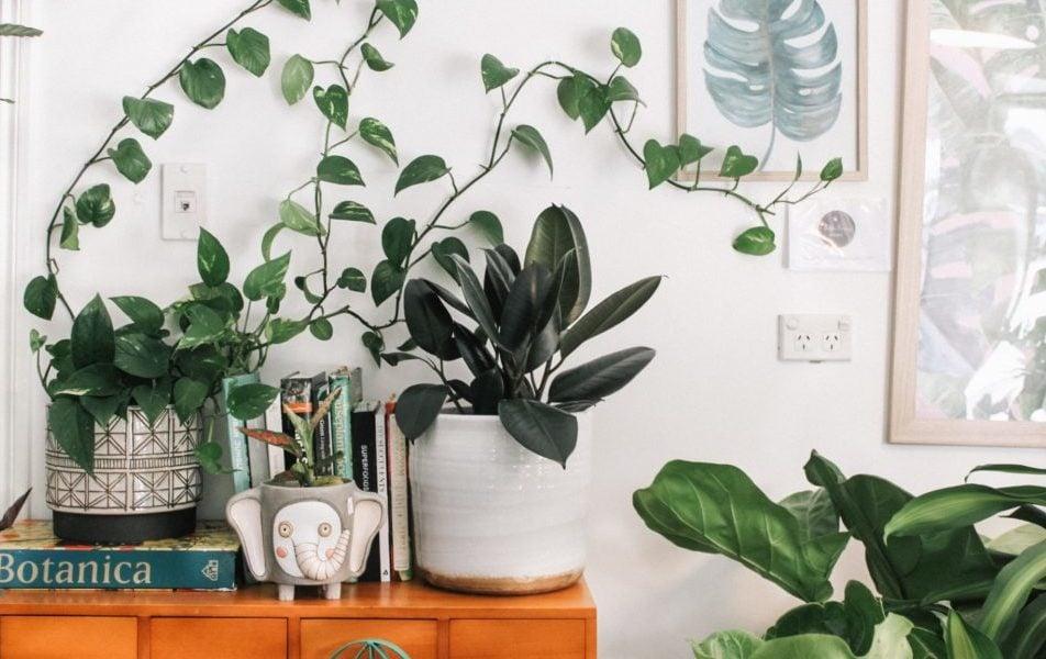 Groene planten op kastje, vooraanzicht