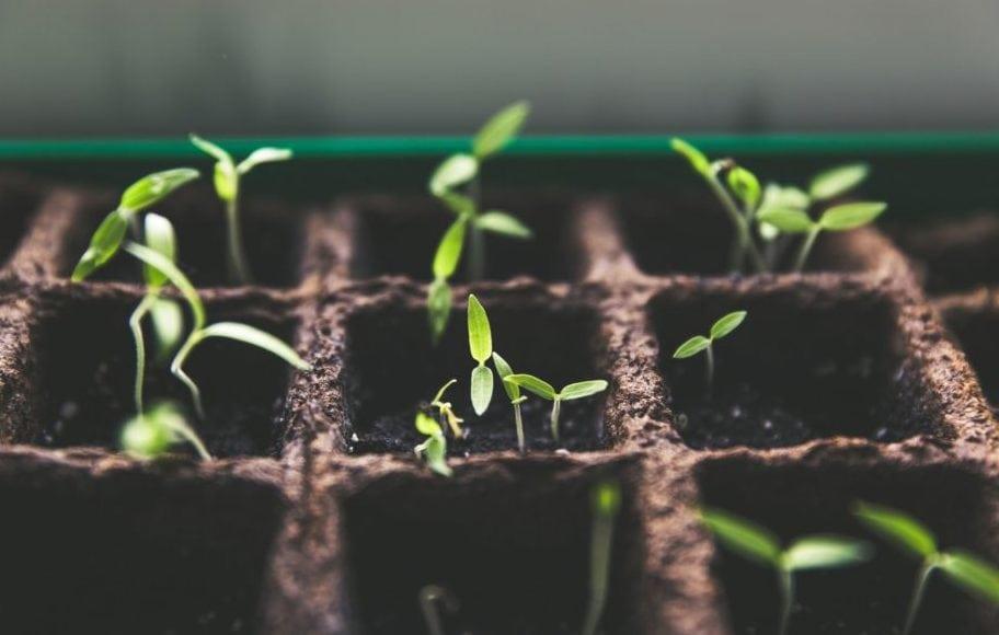 Jonge plantjes, vooraanzicht